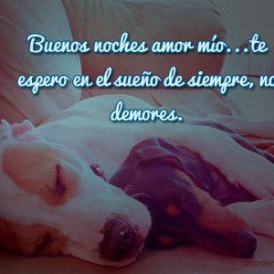 buenas noches mi amor abrazo cachorros