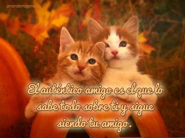 Frases de amistad con imágenes de gatos amigo eterno