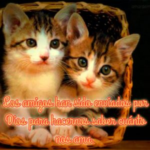 Frases de amistad con imágenes de gatos envio