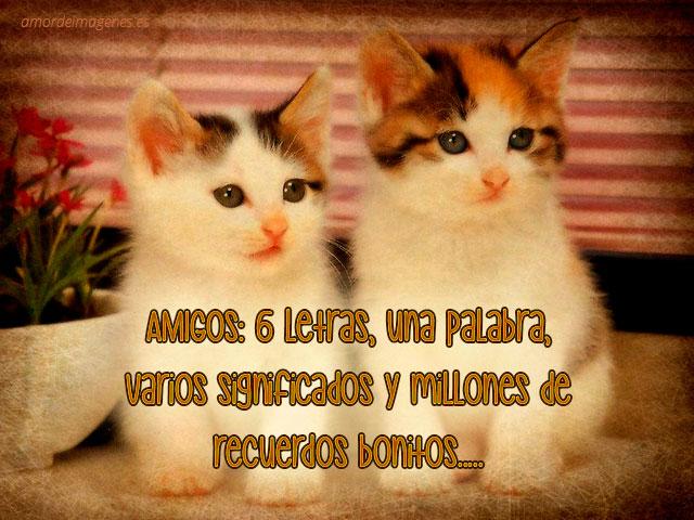 Frases de amistad con imágenes de gatos letras