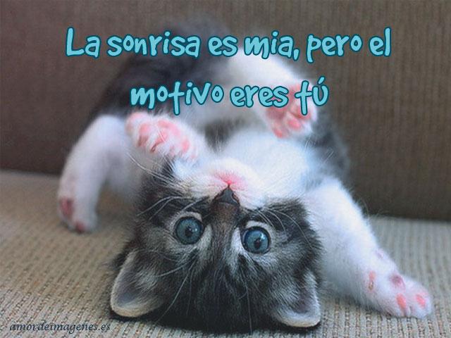 Imagenes de gatitos tiernos con frases de amor gato risueño