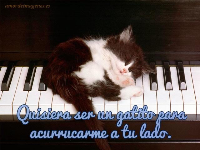 Imagenes de gatitos tiernos con frases de amor gato dormido