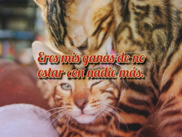 Imagenes de gatitos tiernos con frases de amor gatos abrazxados