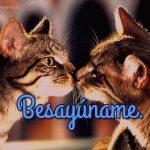 imagenes de amor con gatitos para facebook besayuname