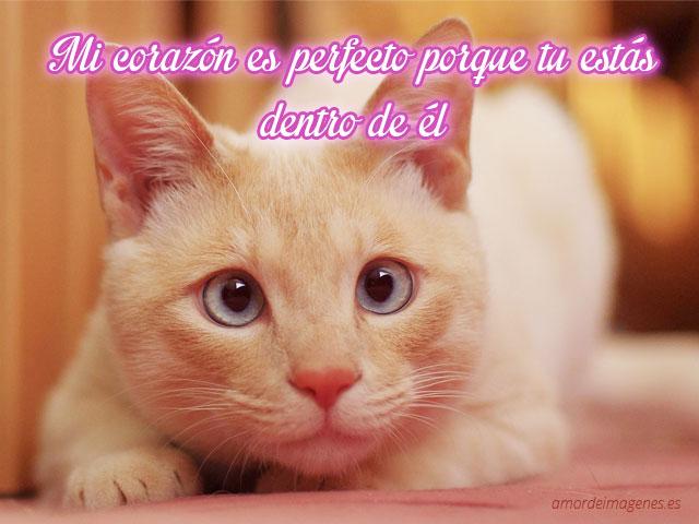 Imagenes-de-amor-de-perritos-y-gatitos-gato-blanco