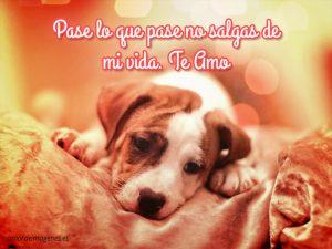 Imagenes-de-amor-de-perritos-y-gatitos-perro-triste