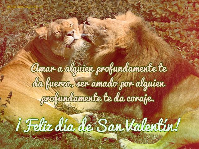 Imgenes de amor para San Valentn pareja leones  amordeimageneses
