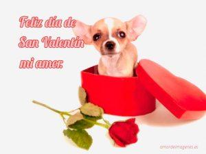Imágenes de perros con la frase feliz día de san valentín chihuahua