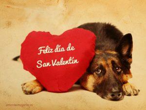 Imágenes de perros con la frase feliz día de san valentín pastor aleman
