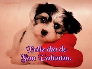 Imágenes de perros con la frase feliz día de san valentín shitzu