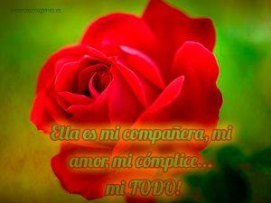 Imágenes de rosas con frases de amor fondo verde