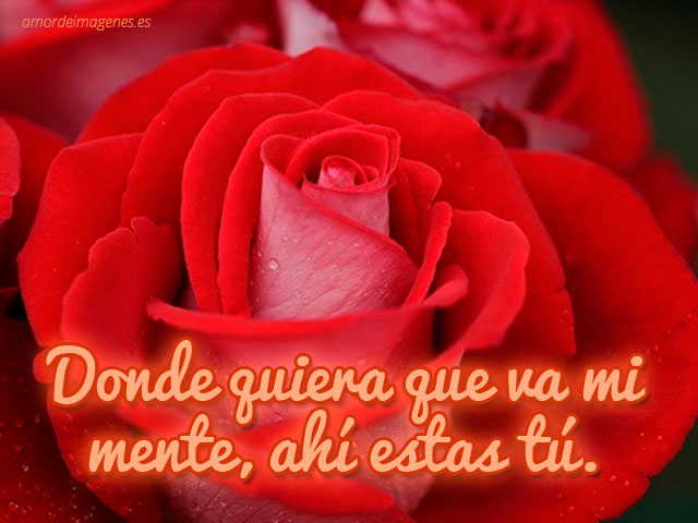 Imágenes de rosas con frases de amor rosa roja