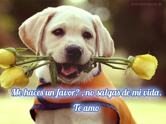 Frases de amor con imágenes de perritos