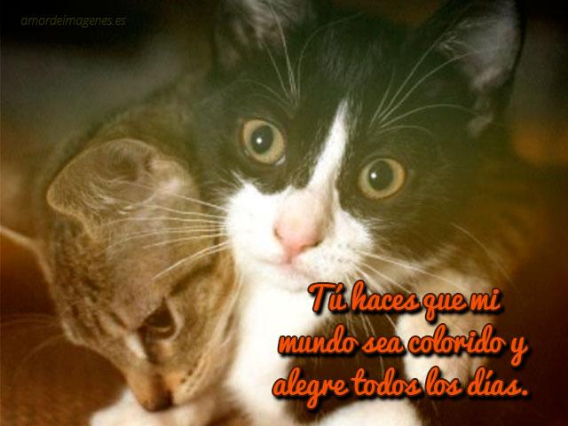 Imágenes de gatos con frases de amor para descargar gratis