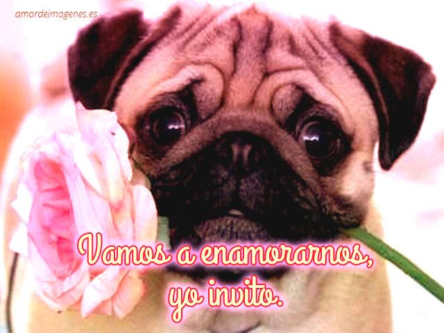 Imagenes De Perritos Bonitos Con Frases De Amor