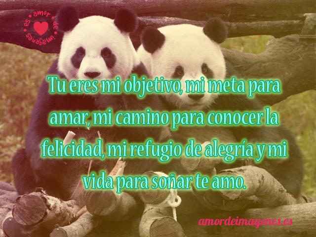 bellos-osos-panda