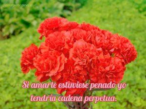 Imágenes de claveles rojos con frases jardín