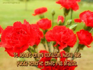 Imágenes de claveles rojos con frases parque
