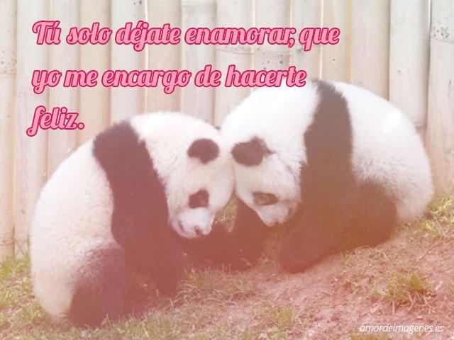 Imágenes tiernas de pandas con frases cabezas