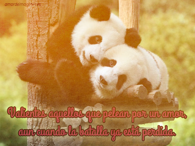imágenes tiernas de pandas con frases arbol