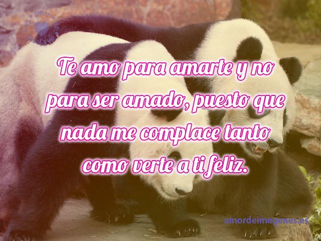 Imágenes Tiernas De Pandas Con Frases