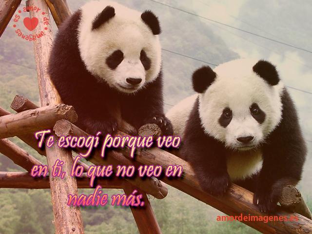 Frases De Amor Y Osos Peluches Imagenes Tiernas Y | apexwallpapers.com