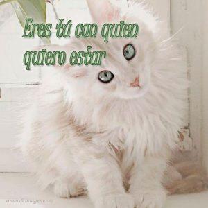 Imágenes de amor con gatitos lindos contigo quiero estar