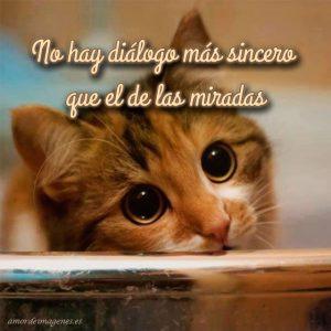 Imágenes de amor con gatitos lindos mirada
