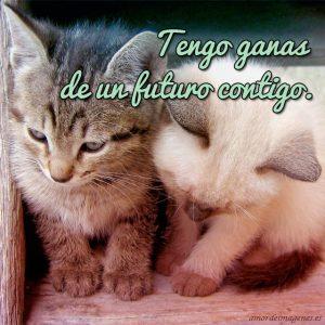 Imágenes de amor con gatitos lindos pareja de gatitos