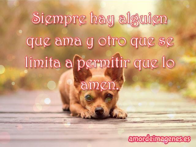 Muitas vezes Imágenes con frases de amor con perros chihuahuas CT28