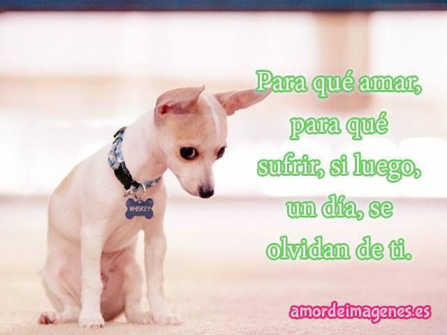 Muitas vezes Imágenes con frases de amor con perros chihuahuas HP85