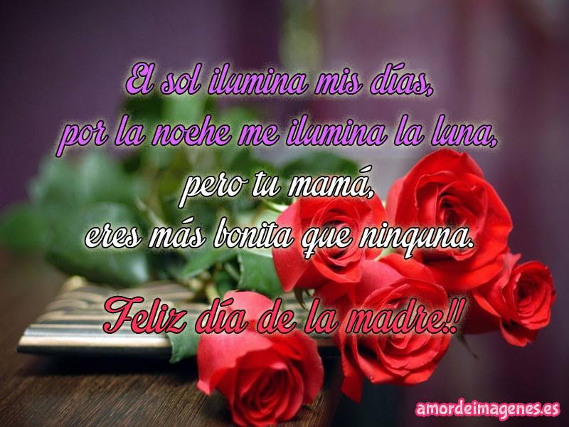imagen de un bello ramo de rosas rojas seguramente un