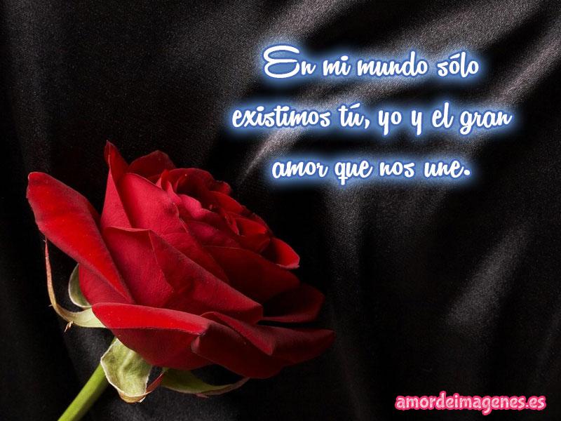 imagenes de rosas con frases de amor rosa roja.jpg