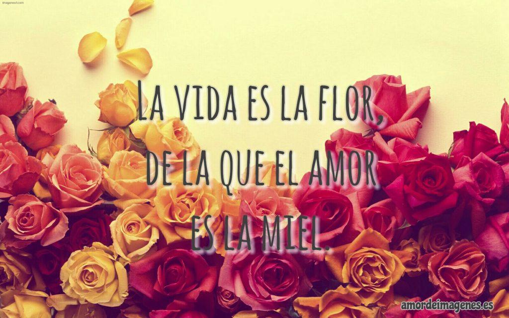 Rosas Bonitas de Amor flor de la vida