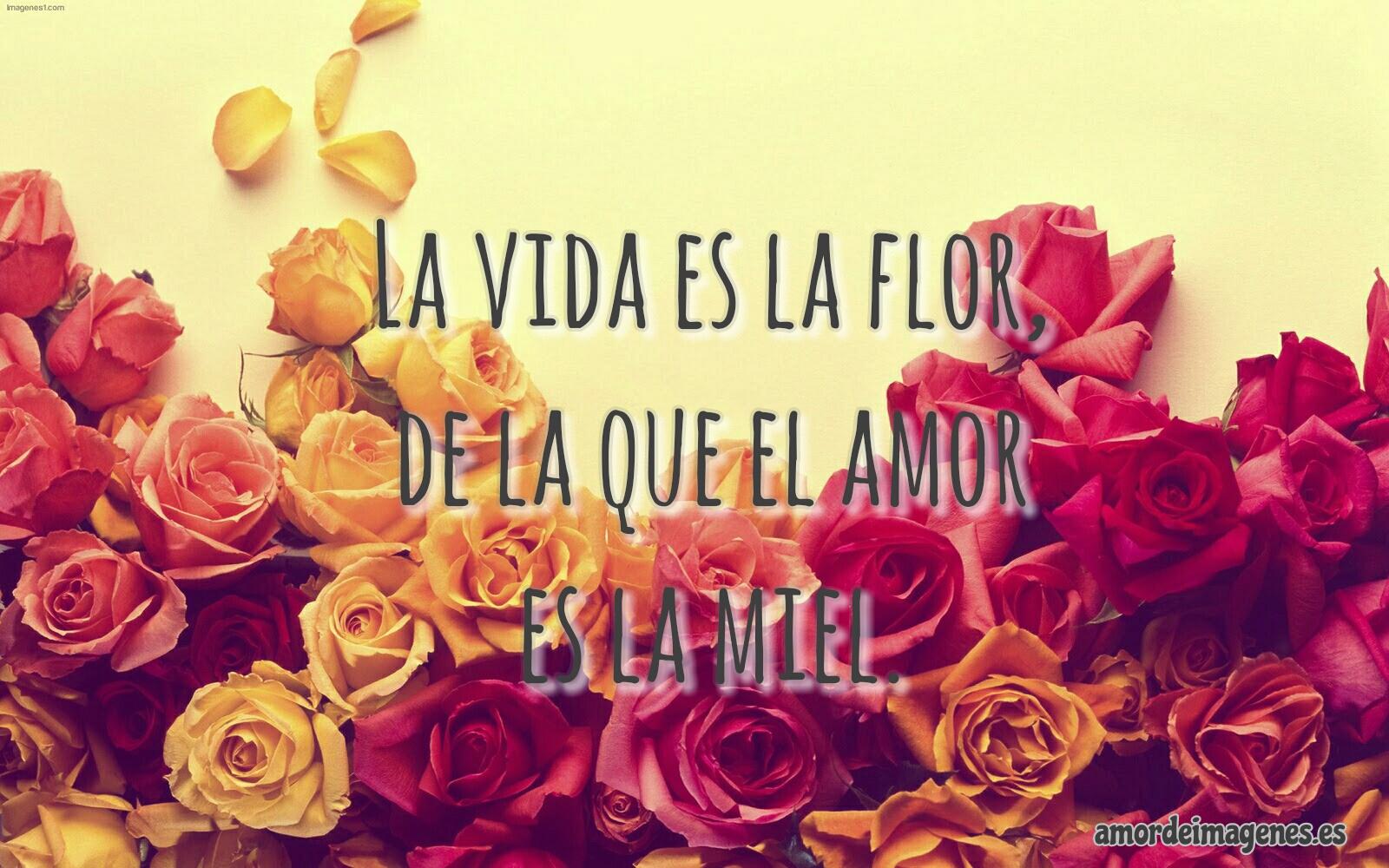 Rosas Bonitas de Amor