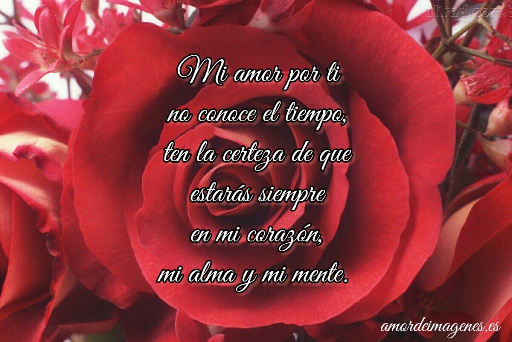 Rosas Bonitas de Amor rosa roja