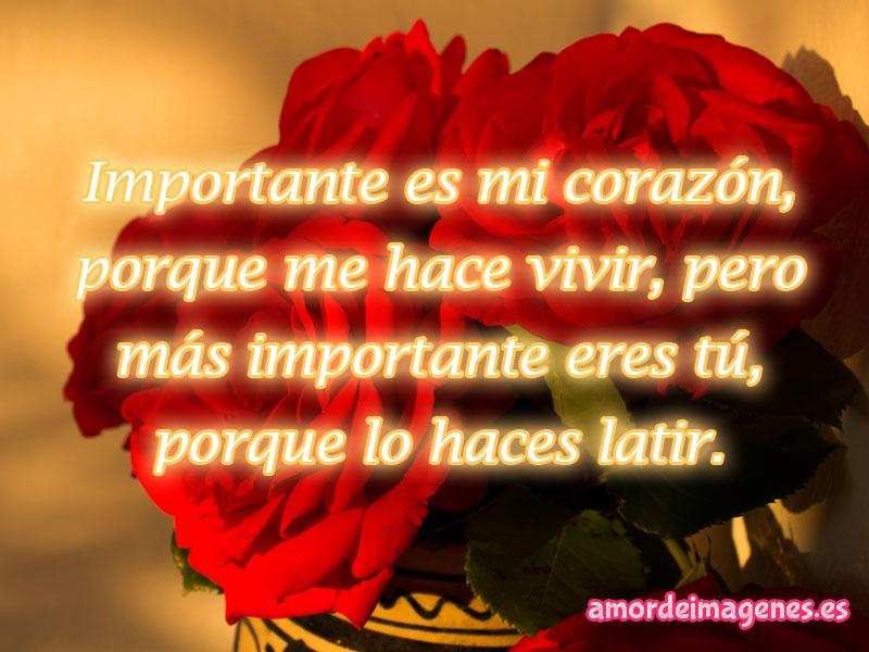 rosas rojas importancia