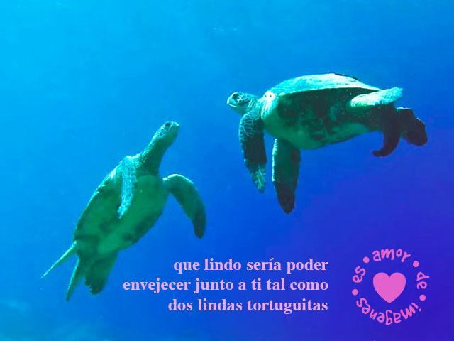 Frases De Amor Con Tortuguitas Bajo El Agua