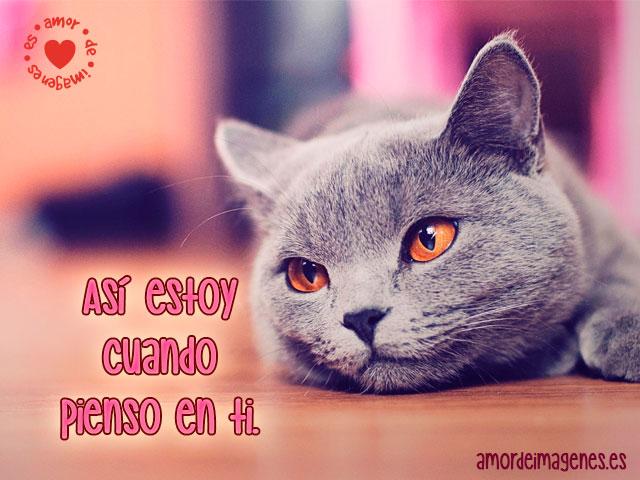Imágenes Bonitas De Animales gato gris