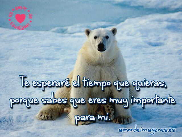 Imagenes Bonitas De Animales