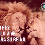 imagenes de leones cariñosos