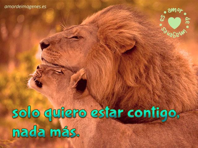 pareja de leones queriendose