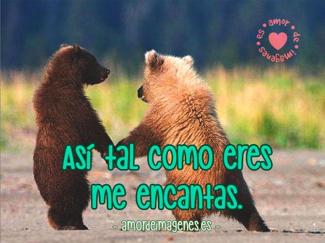 Imágenes de Ositos con Frases de Amor osos pardos