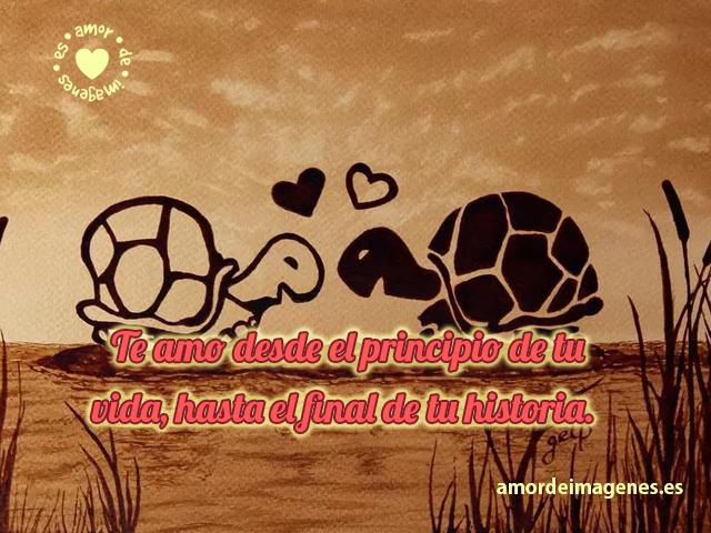 tortugas-con-frase-de-amor