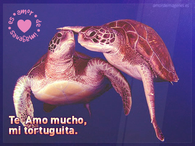 tortugas enamoradas bajo el agua