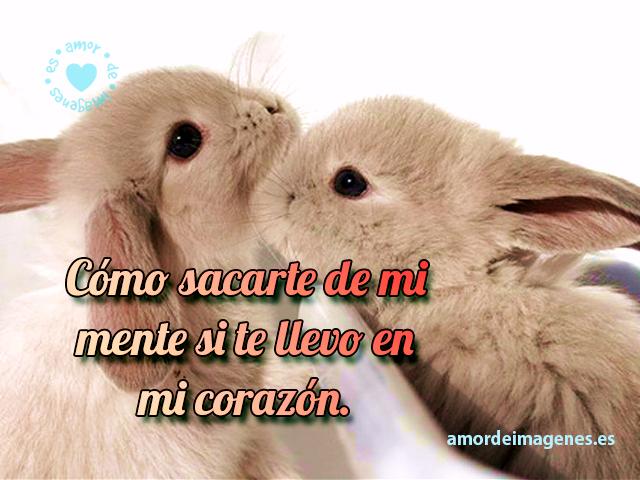 conejitos-besandose-con-frase