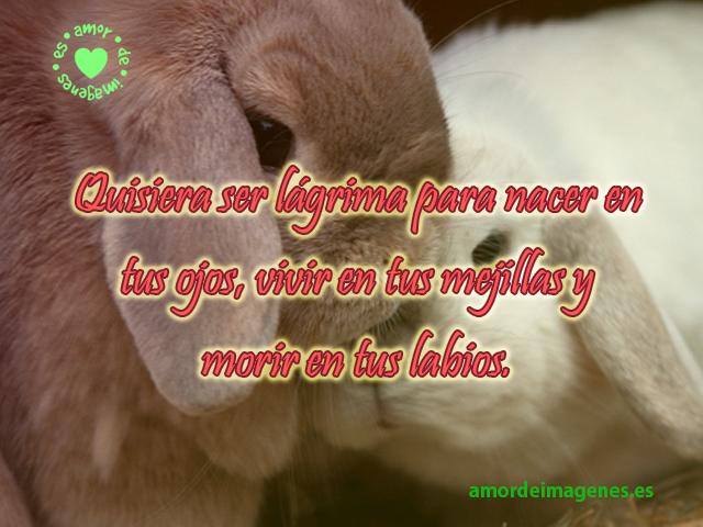 conejos-con-frase