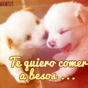 Imágenes de Perritos de Amor besos