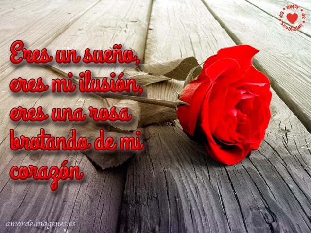 Imágenes de Rosas con Frases de Amor rosa roja sola