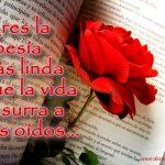Imágenes de Rosas con Frases de Amor rosa y libro